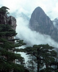 A steep rocky mountain with fog and pine trees