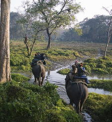 An elephant safari in the a nature preserve