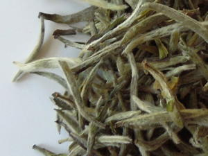 Loose-leaf silver needle white tea, showing downy white tips