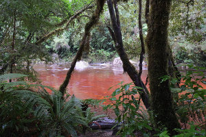 Tannins in a forested river, showing a deep red-brown water