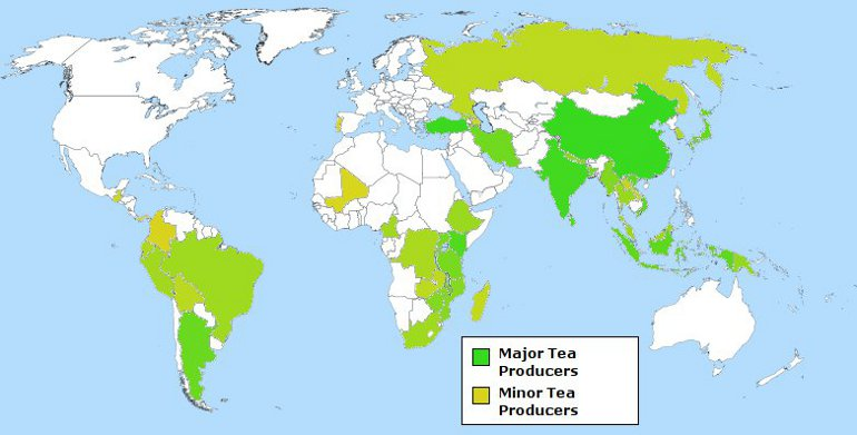 World Map Highlighting Major and Minor Tea Producing Countries