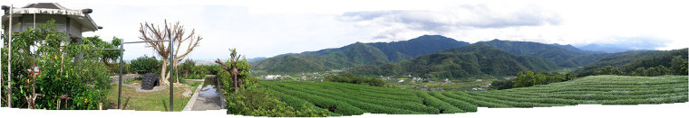 A panorama of a tea plantation in Yilan