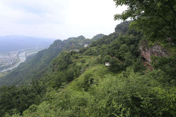 View looking down a mountain with a river in distance, steep hillside covered in foliage with a few terraced tea gardens