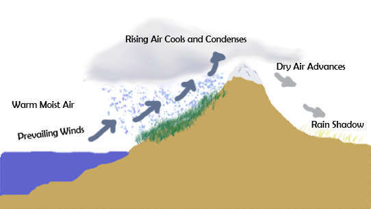 Diagram showing warm moist air pushed by prevailing winds up a mountain, rising air cools and condenses, creating rainy area with lush vegetation, dry air advances, causing rain shadow and desert