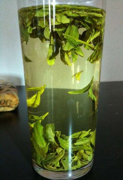 Tall glass filled with whole green tea leaves, pale yellow tea brewing, leaves clustering at top and bottom of water in glass