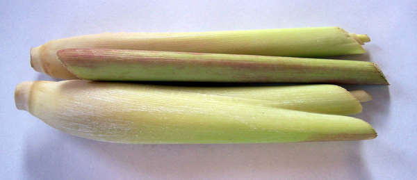 two neatly-cut lemongrass stem sections, showing pinkish-white bases, and yellow-green farther up