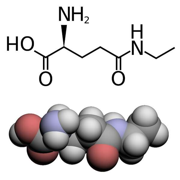 Two molecular diagrams of L-theanine, skeletal diagram top, spacefill on bottom showing Oxygens in red and Nitrogens blue