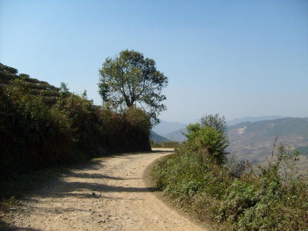 Curving dirt road, tea plantations on hillside rising to the left, scenic view of mountains on right