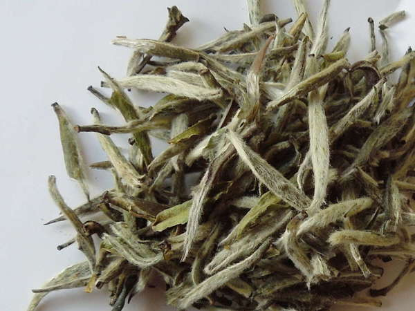 Loose-leaf tea buds, silvery and covered in fine hairs