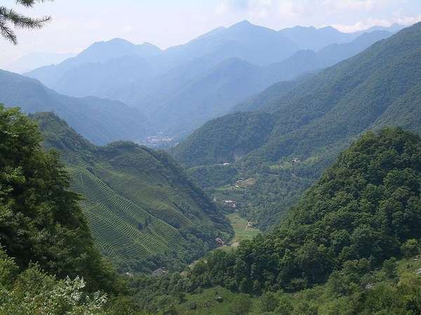 Lush green mountains mostly covered in forests, surrounding a valley, with finely-textured rows of tea plants covering one large hillside