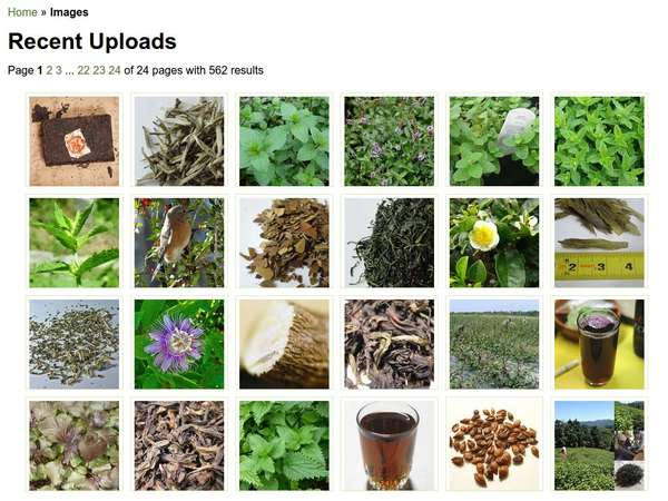 Screenshot showing a grid of images, mostly of tea or plants