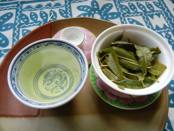 Gaiwan with dark green, pointy wet leaves, Chinese teacup with pale yellow liquid, on a plate, on a teal and white tablecloth background