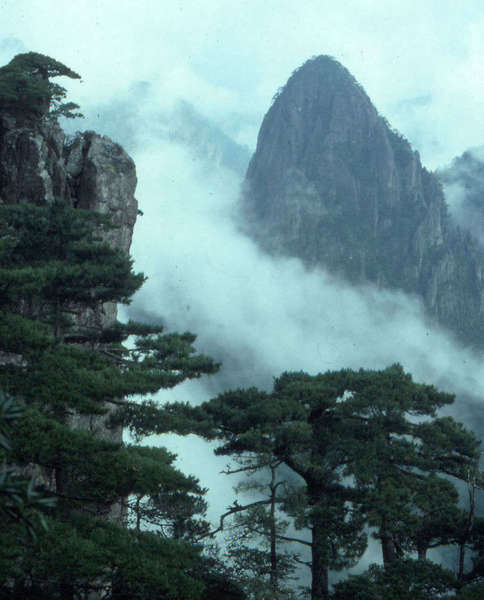 Dense clouds wind around steep rocky cracks, with gnarly pine trees in the foreground